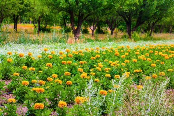 جلوه های طبیعت مزرعه آرتان در تابستان